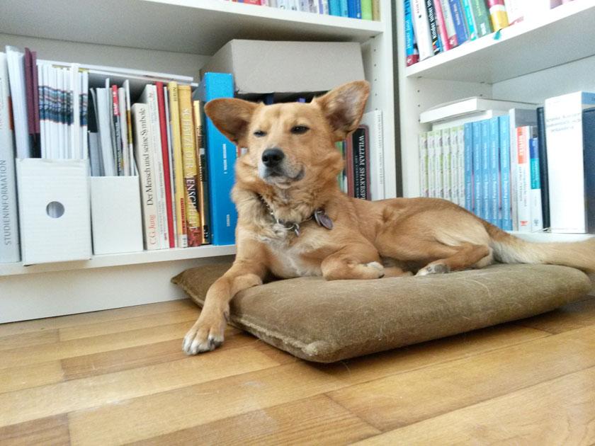 Kollege Hund: Bürohunde gegen Stress und Burnout